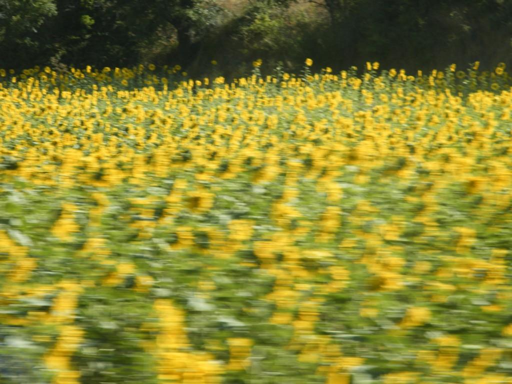 Las flores símbolo de la vida