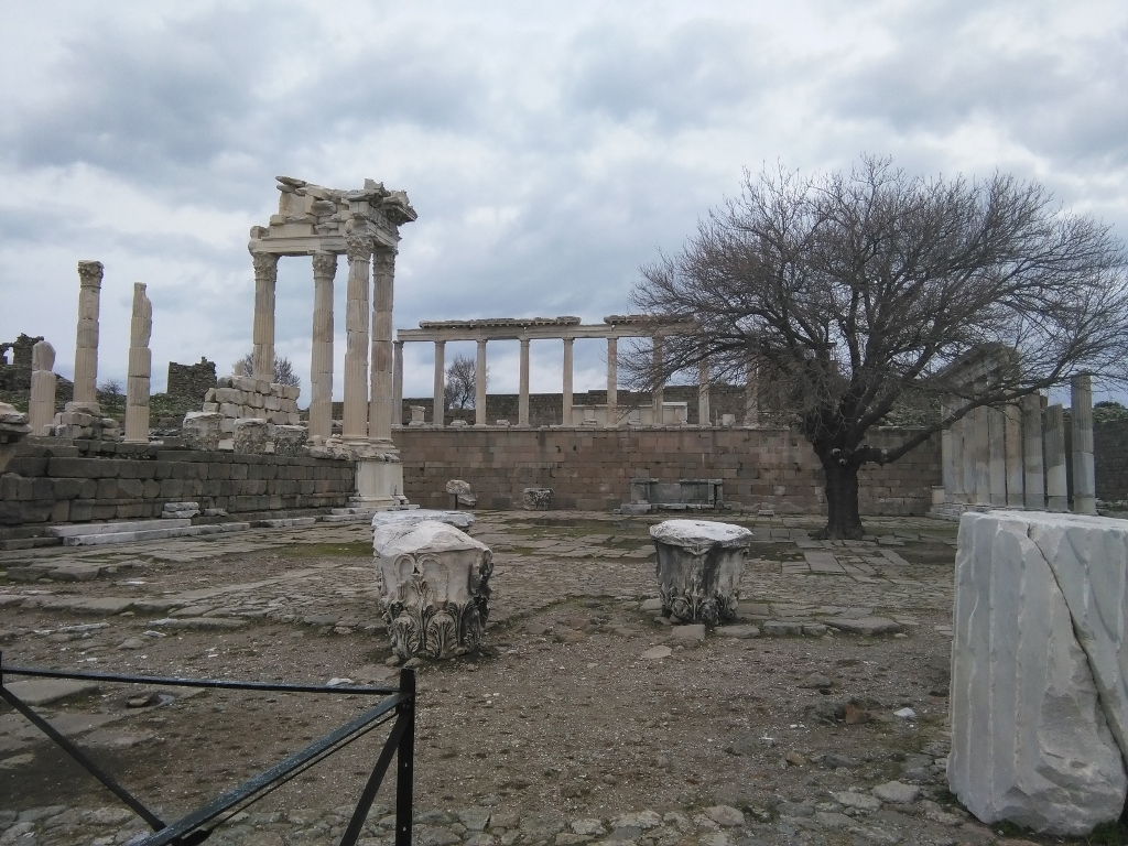 árboles en las ruinas de Turquía