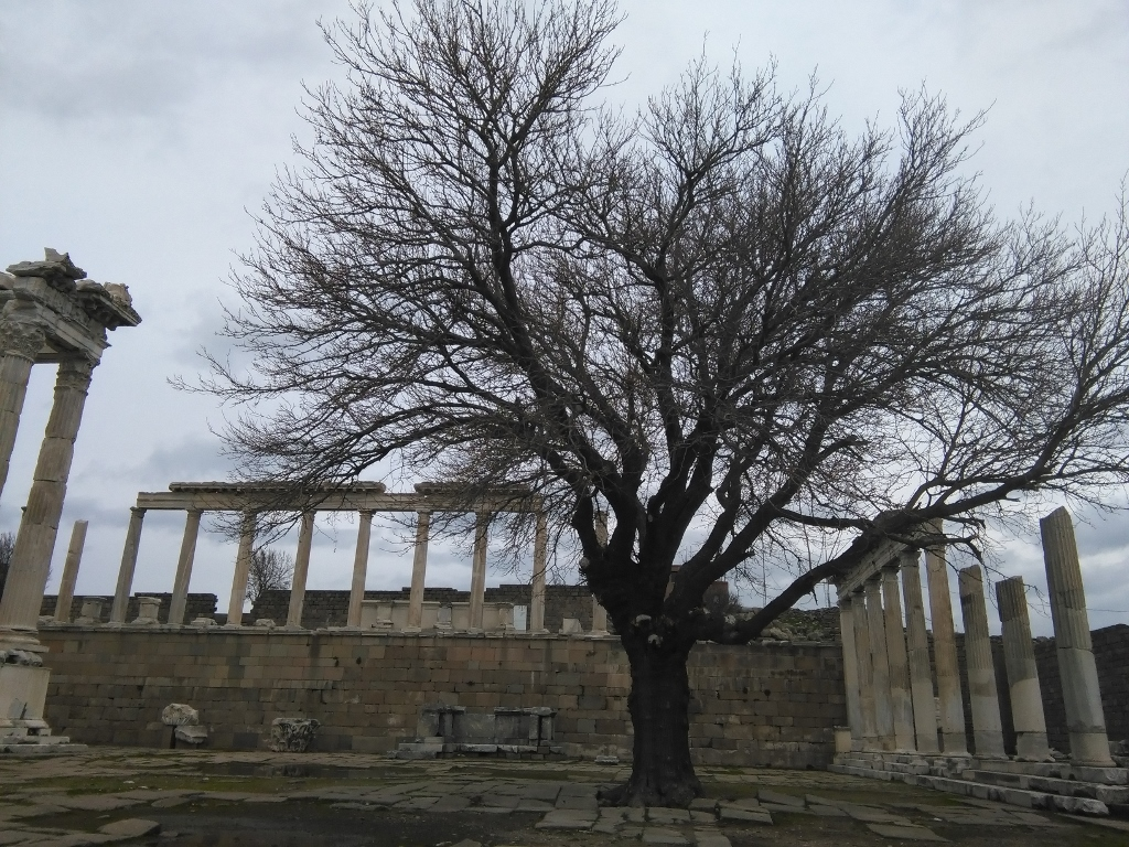 árboles que crecen en mitad de las ruinas de Turquía
