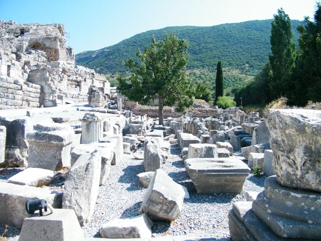 árboles en las ruinas de Ephesus