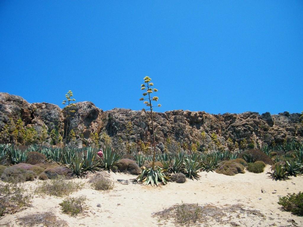 flora en la playa de Balos en creta