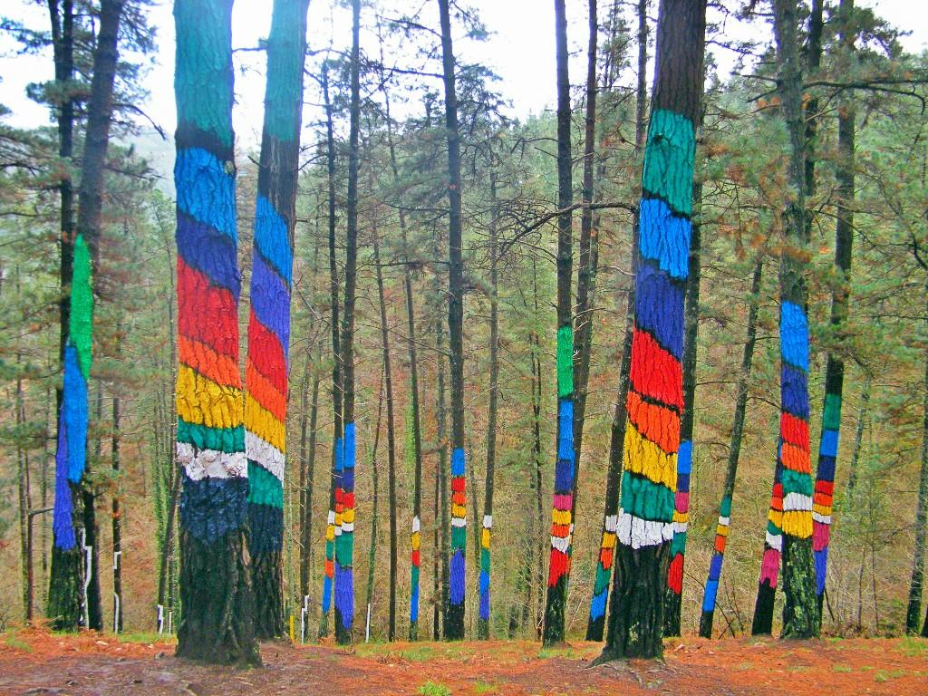 impacto de color en la naturaleza del bosque de oma