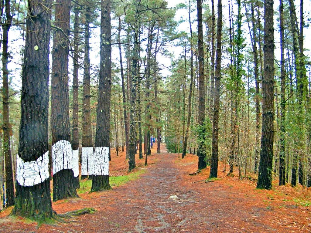 continuamos en el bosque de Oma