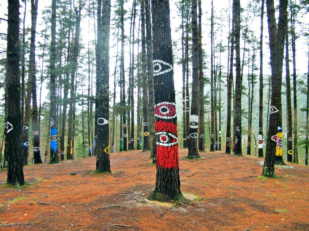 ojos en los árboles del bosque de Oma