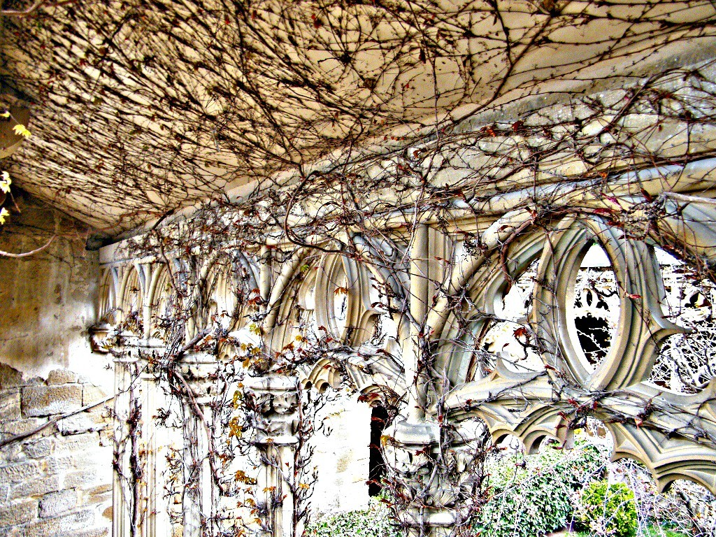 enredaderas en el castillo de Olite en Navarra