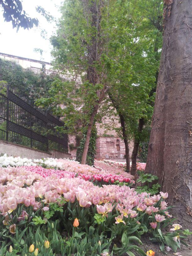la época de los tulipanes en estambul